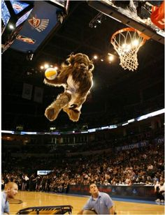 Check out high flying stunts from the OKC Thunder's mascot Rumble the Bison while watching a Thunder game at the Chesapeake Energy Arena in Oklahoma City.