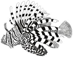 lionfish drawing - Google Search