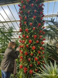 Behind the Scenes at the Kew Orchid Extravaganza 2017 - Pumpkin Beth Kew Gardens, Botanical Gardens, Growing Plants, Stems, Red Flowers, Wonderful Places, Planting, Indoor Plants, House Plants