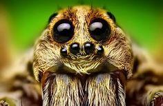 Soñar con arañas - Tarot y videncia gratis
