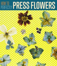 How To Press Flowers | Get the tutorial and step by step on how you can press flowers for your many craft projects. #DiyReady diyready.com