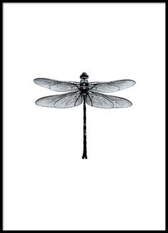 Dragonfly black and white - 21x30Dusty rose - 50x70Footprints in the sand - 30x40Life is - 30x40Lotu...