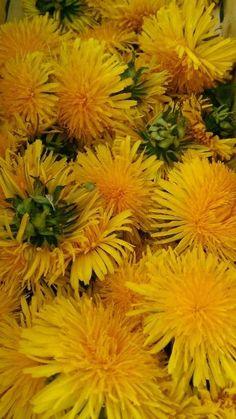 Bylinkové likéry a vína | Bylinky pro radost - Part 7 Korn, Summer Fun, Vodka, Home And Garden, Healthy, Plants, Gardening, Ideas, Syrup