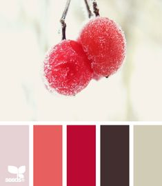 Winter Berry colors.