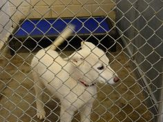 To Be KILLED 05/19/17 ***Reason: SPACE*** HOWIE 6698