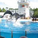 Orlando, Florida Sea World! Where I planned to become a marine biologist when I grew up! Orlando Vacation, Florida Vacation, Orlando Florida, Vacation Spots, Florida Beaches, Vacation Ideas, Places To Travel, Places To See, Florida Dolphins