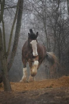 Clydesdale - I just want to ride horses all day...