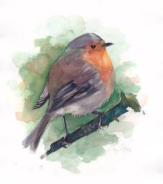 Red Robin watercolor painting Bird painting by Verbrugge Watercolor, $18.00