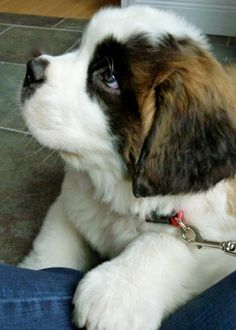 fancitaste:  capitu-65:  (via All the Cutest Puppies Online Today [19 Pictures] - Terribly Cute)  (via TumbleOn )