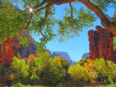 19 Stunning Photos of National Parks in the Fall  Temple of Sinawava, Zion National Park