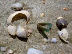 India: Malabar coast 22