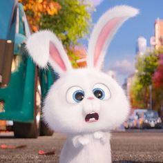 Rabbit Wallpaper, Cute Panda Wallpaper, Cartoon Wallpaper Iphone, Cute Disney Wallpaper, Funny Cartoon Gifs, Cute Cartoon Characters, Cute Love Pictures, Cute Cartoon Pictures, Snowball Rabbit