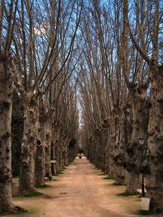 Jardin d'Essai, Algeria