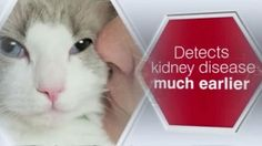 Steve Dale writes about a new test called SDMA to determine Chronic Kidney Disease in Cats