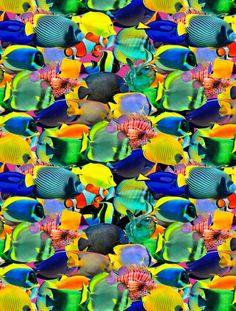 Os peixes ornamentais do Studio Aurum