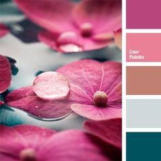 Brown Color Palettes, color, color matching, color palettes for decoration, colors for decoration, fuchsia, indian red, magenta, pale cornflower blue, palette for designer, Pink Color Palettes, shades of pink, slate-gray.
