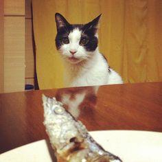 秋刀魚探知機能作動中。#cat - @rivgood- #webstagram