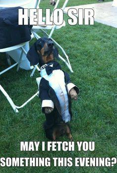 funny dog pic!