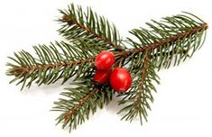 Essential Oils for the Holidays