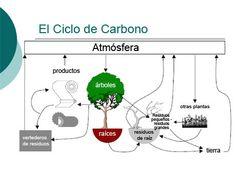 carbon-cycle by Miguel Garces, via Flickr