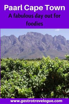 Paarl Cape Town fabulous day out for foodies