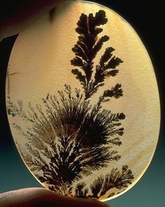 Dendritic Agate   #Geology #GeologyPage #Agate #Mineral  Transluscent oval of dendritic agate from the National Gem Collection  Photo Copyright  Chip Clark  Geology Page www.geologypage.com