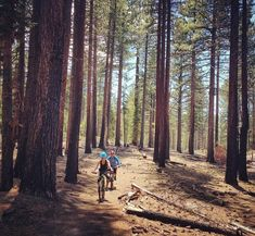 Tahoe Rim Trail Mountain Bike Trail in Tahoe City, California || SINGLETRACKS.COM