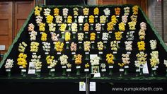 R & A Scamp Quality Daffodils of Cornwall created this incredible, Gold Medal winning daffodil exhibit for the RHS London Spring Plant Extravaganza 2016. Beautiful daffodils were also being sold as cut flowers by Ron Scamp at this show, which is held in the RHS Lawrence Hall, in Westminster.