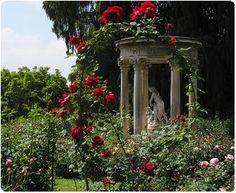 The Hidden Rose Garden || Operation: Force blueblackrose to Become ...