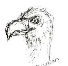Sketch: Eurasian Griffin Vulture by Max Frances