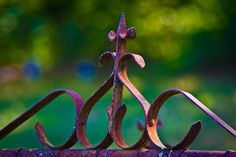 A rusty fence gate in an old graveyard in Texas holds back the bokeh. Fence Gate, Fences, Fancy Fence, Contemporary Garden, Iron Gates, Garden Gates, Bokeh, The Great Outdoors, Wrought Iron