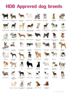 Dear HDB owners, are you aware that HDB allows only certain breeds of dogs to be kept as pets in HDB flat. The approved breeds are small dogs which are generally more manageable. Any flat owner who. Dog Breeds Chart, Types Of Dogs Breeds, Small Dog Breeds, Small Dogs, Dog Types, Dog Breeds List Of, Medium Dog Breeds, Dog Breeds That Dont Shed, Different Types Of Dogs