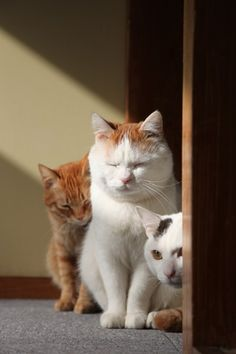 Chatra, Shiro & Mimi