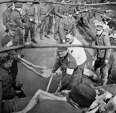 This picture shows British soldiers forcing SS member to load corpses onto a truck at Bergen-Belsen.