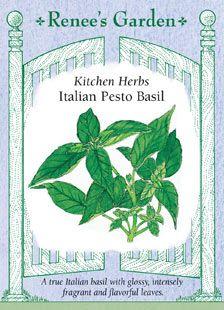 "Basil, ""Italian Pesto"" heirloom. ark green basil has especially glossy dark green leaves and full-bodied zesty flavor for really authentic Italian pesto sauce."
