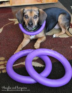 Luna poses with the PULLER rings