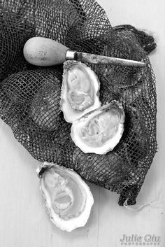 Shucked Pleasure House Oysters from Lynnhaven River, Virginia