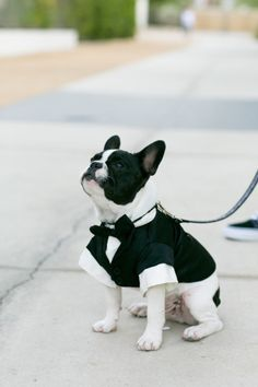 The cutest little pup! http://www.stylemepretty.com/california-weddings/palm-springs/2015/04/03/whimsical-desert-wedding-in-palm-springs/ | Photography: Mi Belle - http://mibelleinc.com/