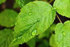leaf - Google Search