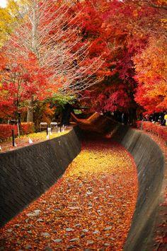 ✯ Autumn - Lake Kawaguchi, Japan - Beautiful