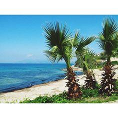 Palm trees in paradise ♡#destinationany #anywheretraveler #travelblogger #traveler #travelgram #instatravel #palmtrees #aegeansea #beachlovers #island #naturelovers #green #summer #summermemories #summerholiday #beautifuldestinations #beautifulsea #bluesea #takemetoturkey #turkey #kusadasi #welivetoexplore #ig_romania #igromania #igersromania