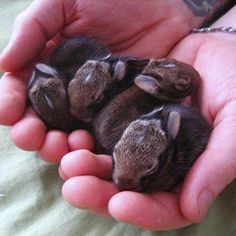 Heart melting cute little baby bunnies Cute Little Animals, Cute Little Baby, Small Baby, Cute Baby Bunnies, Cute Babies, Cutest Bunnies, Jing Y Jang, Animals And Pets, Funny Animals