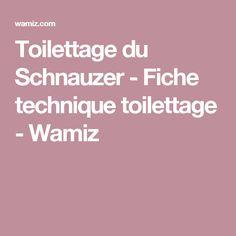 Toilettage du Schnauzer - Fiche technique toilettage - Wamiz