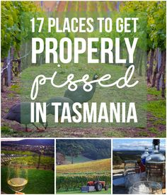 17 Perfect Places To Get Properly Pissed In Tasmania Distillery, Brewery, Wine Gift Baskets, Wine Deals, Wine Storage, Wine And Spirits, Pissed, Tasmania