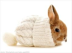 rabbit in knit hat. if you don't find this cute... go locate your heart, please.