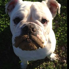 apparently Maggie isn't the only one who likes to flaunt the mudstache