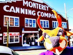Thunder visiting the Monterey Canning Company! #thundereverywhere #gcu #GrandCanyonUniversity