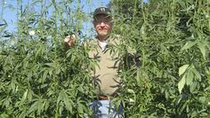 Check this out - The Kenaf plant…I know it looks a little like my favorite plant, industrial hemp, but it's not. Karl Burkart's blog explains how this miracle plant that can pull about 10 tons of CO2 out of the air per growing season!  http://m.mnn.com/green-tech/research-innovations/blogs