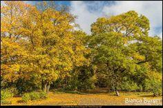 Kienhorstpark im Herbst (Okt 2016) #Berlin #Deutschland #Germany #biancabuergerphotography #igersgermany #igersberlin #IG_Deutschland #IG_berlincity #ig_germany #shootcamp #shootcamp_ig #pickmotion #berlinbreeze #diewocheaufinstagram #berlingram #visit_berlin #Herbst #autumn #canon #canondeutschland #EOS5DMarkIII #5Diii #Natur #nature #Reinickendorf #Baum #tree #colorful #bunt