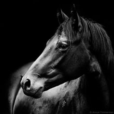 Horse Collection by Anouk Timmerman on 500px